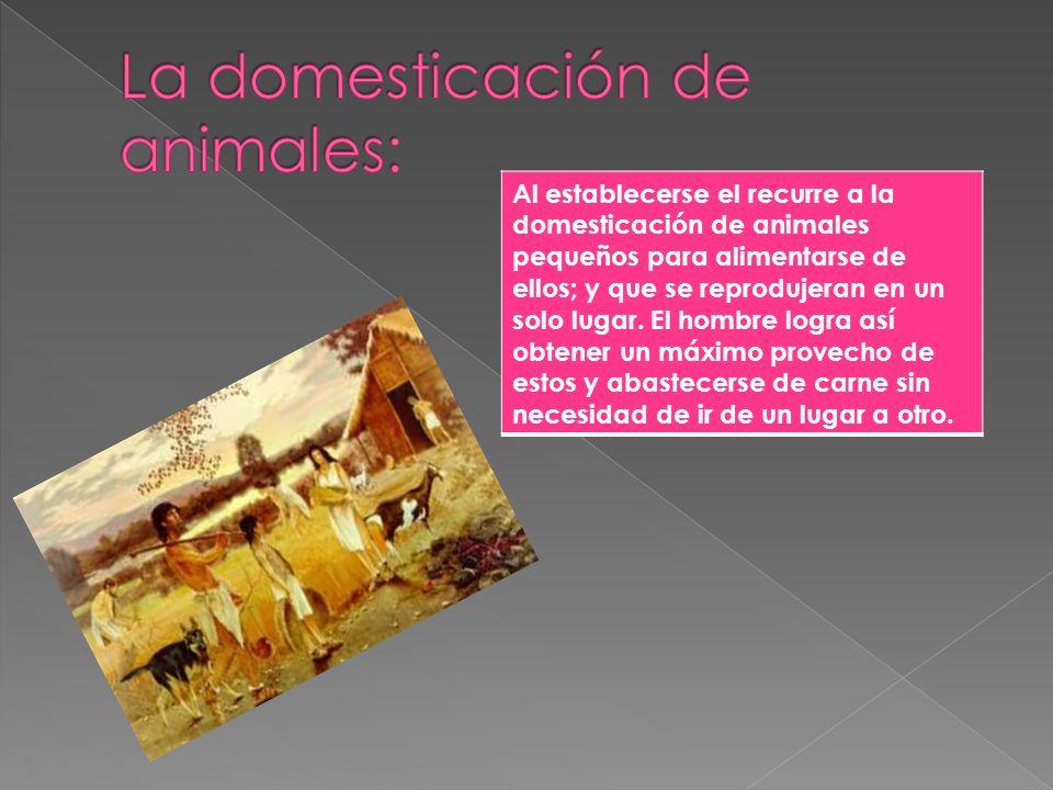 La domesticación de animales: