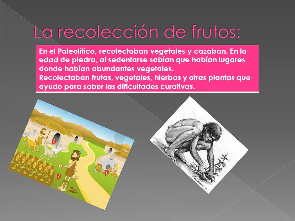 La recolección de frutos: