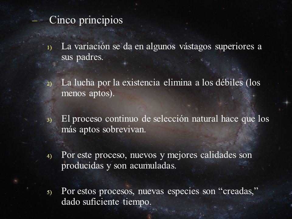 Cinco principios La variación se da en algunos vástagos superiores a sus padres. La lucha por la existencia elimina a los débiles (los menos aptos).