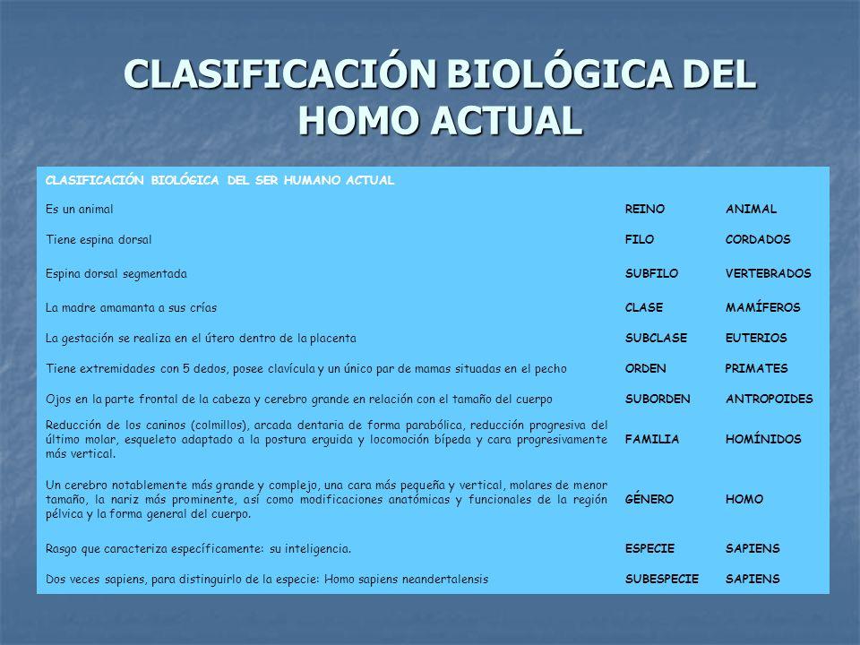 CLASIFICACIÓN BIOLÓGICA DEL HOMO ACTUAL