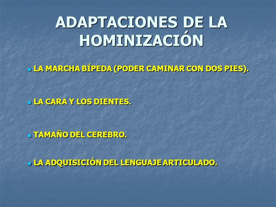 ADAPTACIONES DE LA HOMINIZACIÓN