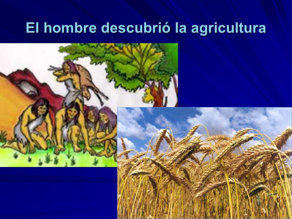El hombre descubrió la agricultura