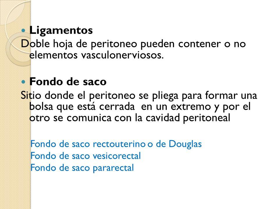 Ligamentos Doble hoja de peritoneo pueden contener o no elementos vasculonerviosos. Fondo de saco.