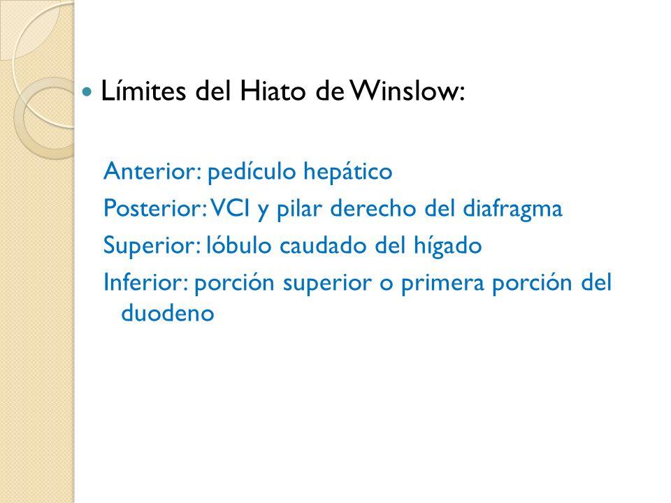 Límites del Hiato de Winslow: