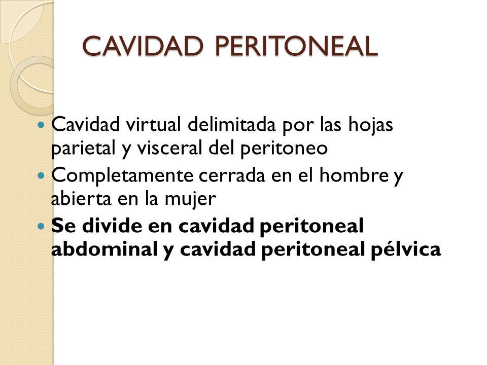 CAVIDAD PERITONEAL Cavidad virtual delimitada por las hojas parietal y visceral del peritoneo.