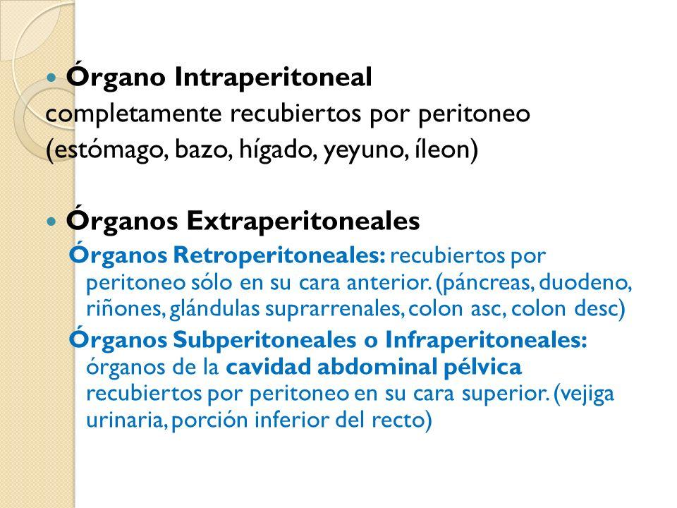 Órgano Intraperitoneal completamente recubiertos por peritoneo
