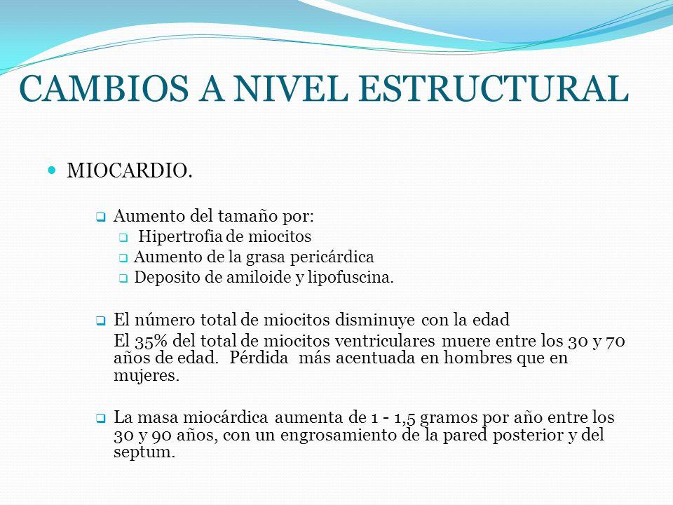 CAMBIOS A NIVEL ESTRUCTURAL