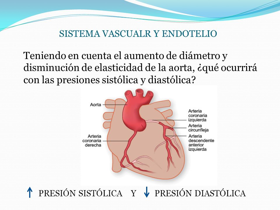 SISTEMA VASCUALR Y ENDOTELIO