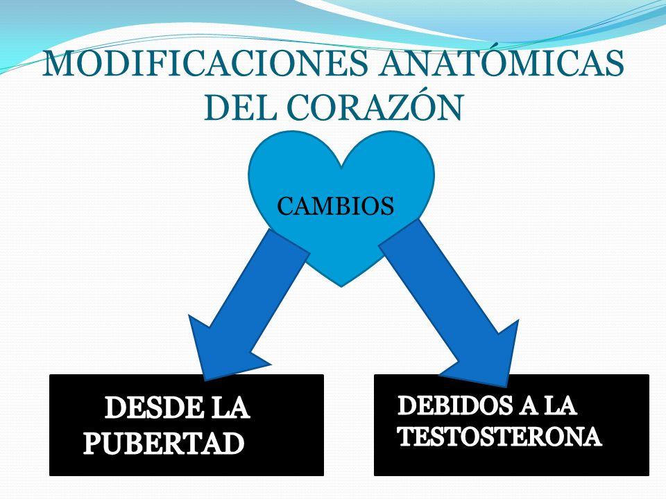 Modificaciones anatómicas del corazón