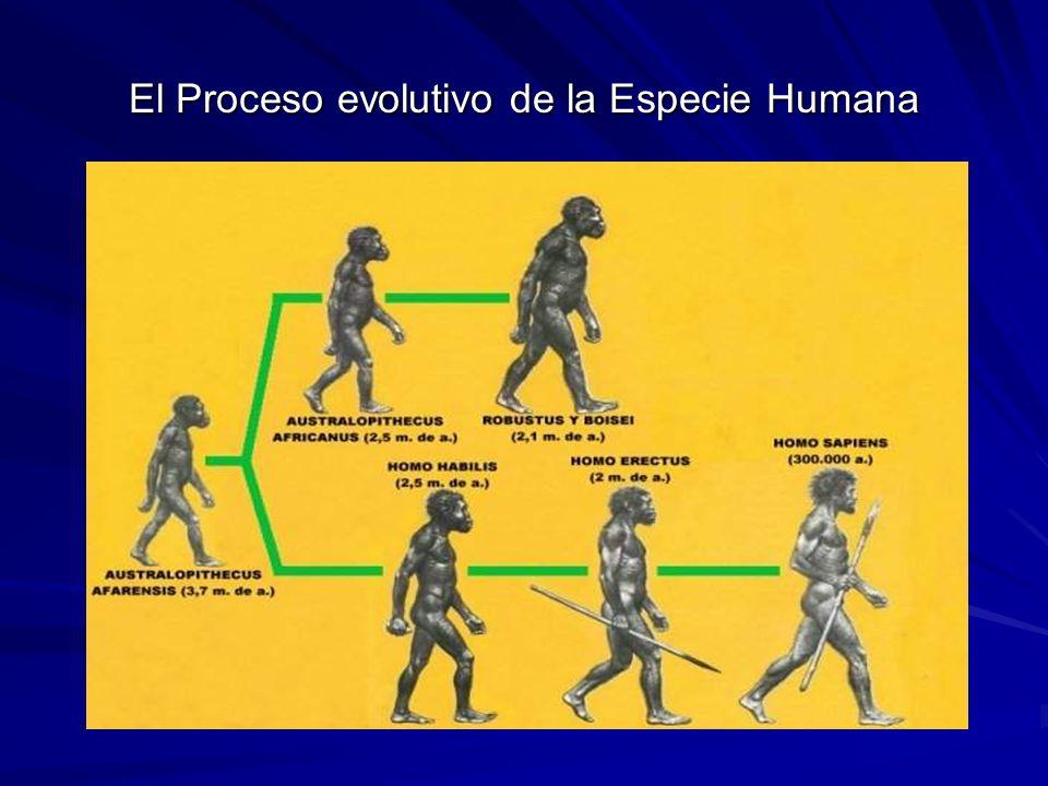 El Proceso evolutivo de la Especie Humana