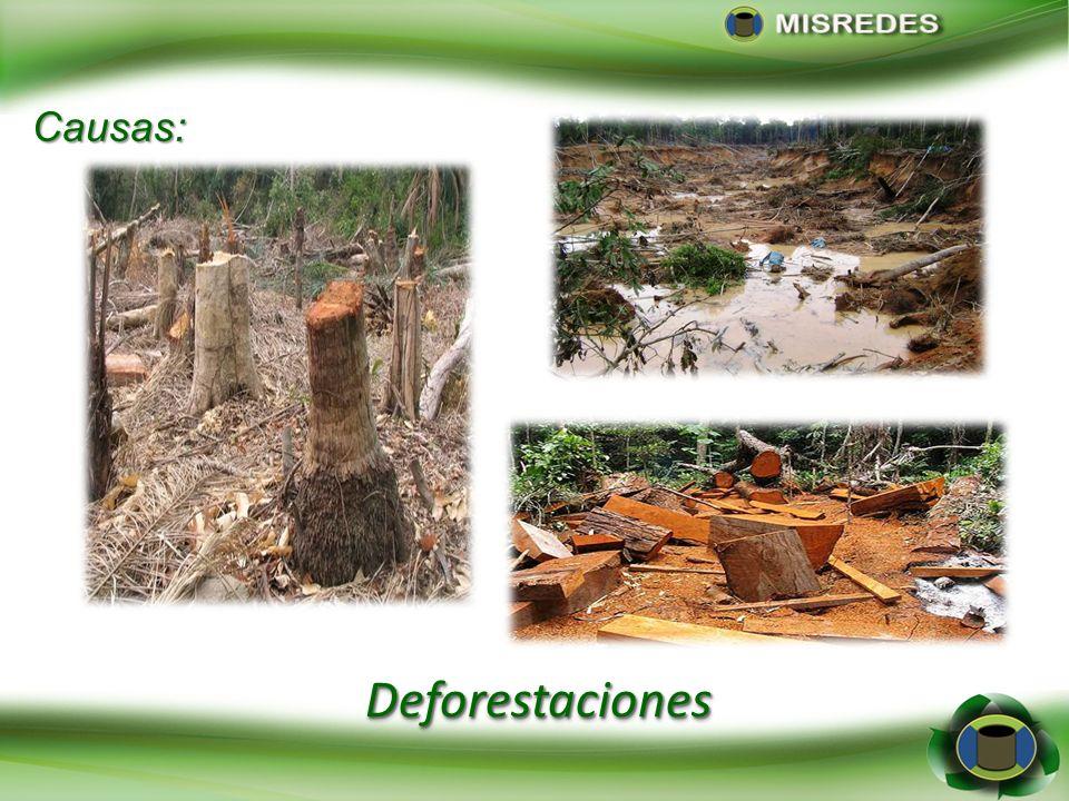 Causas: Deforestaciones