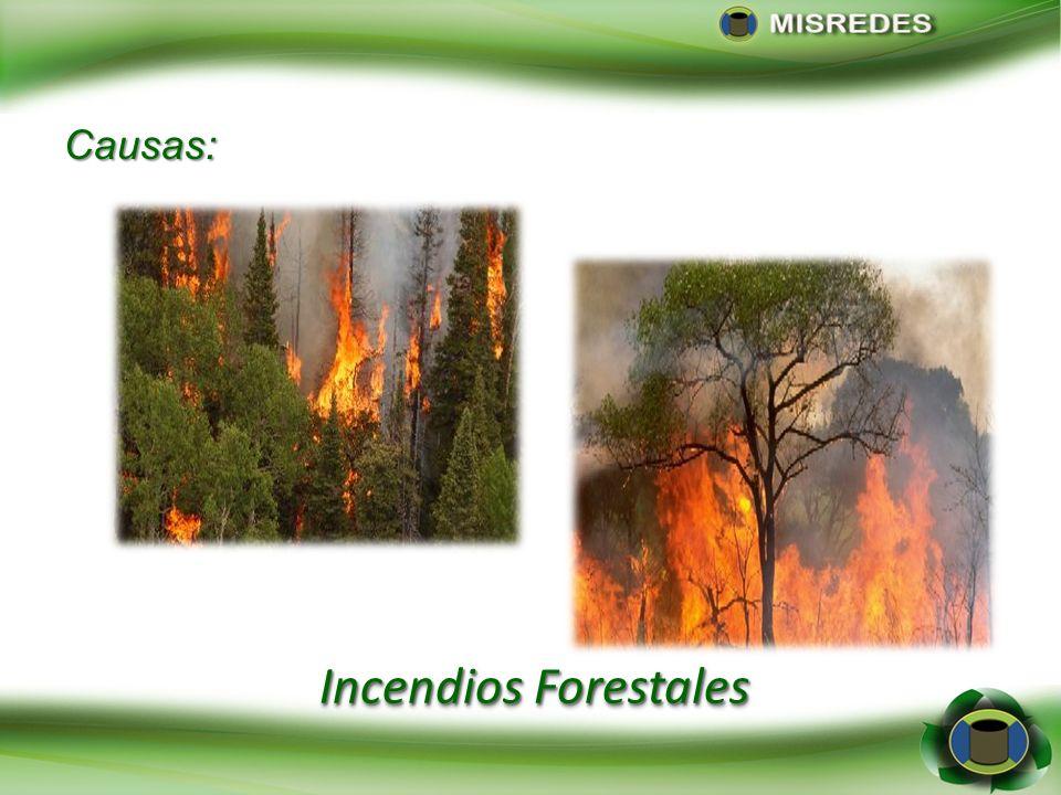 Causas: Incendios Forestales