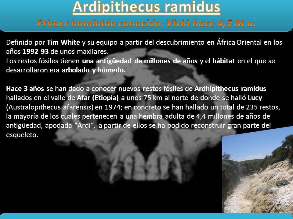 Primer hominido conocido. Vivió hace 4,5 M.a.