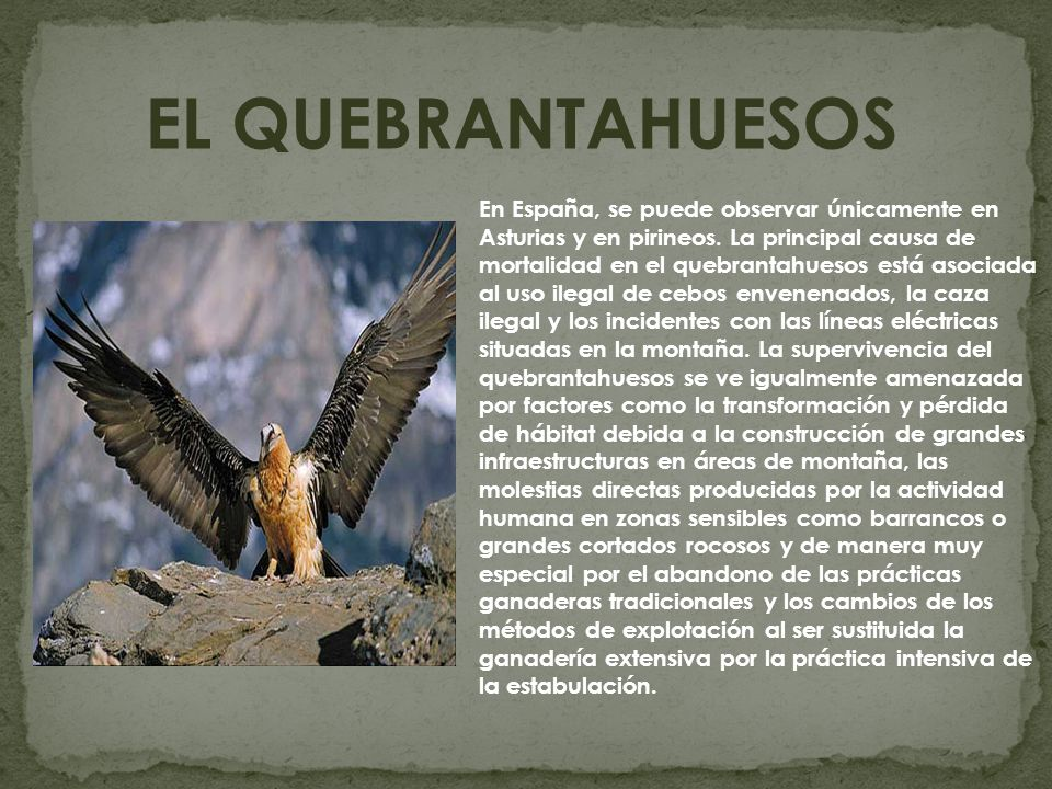 EL QUEBRANTAHUESOS