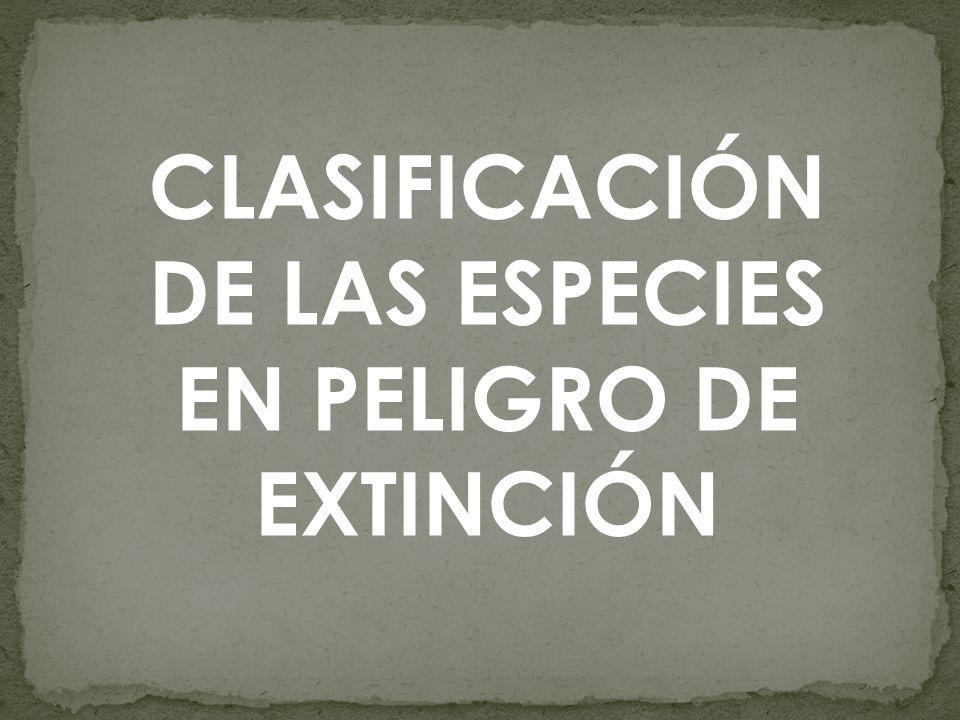 CLASIFICACIÓN DE LAS ESPECIES EN PELIGRO DE EXTINCIÓN