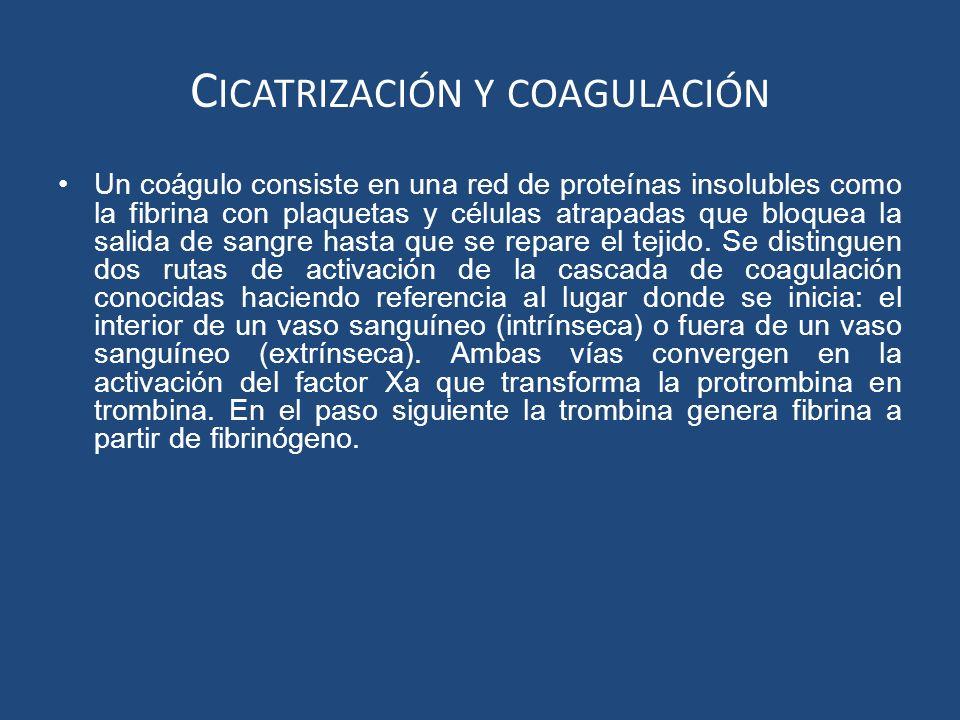 Cicatrización y coagulación