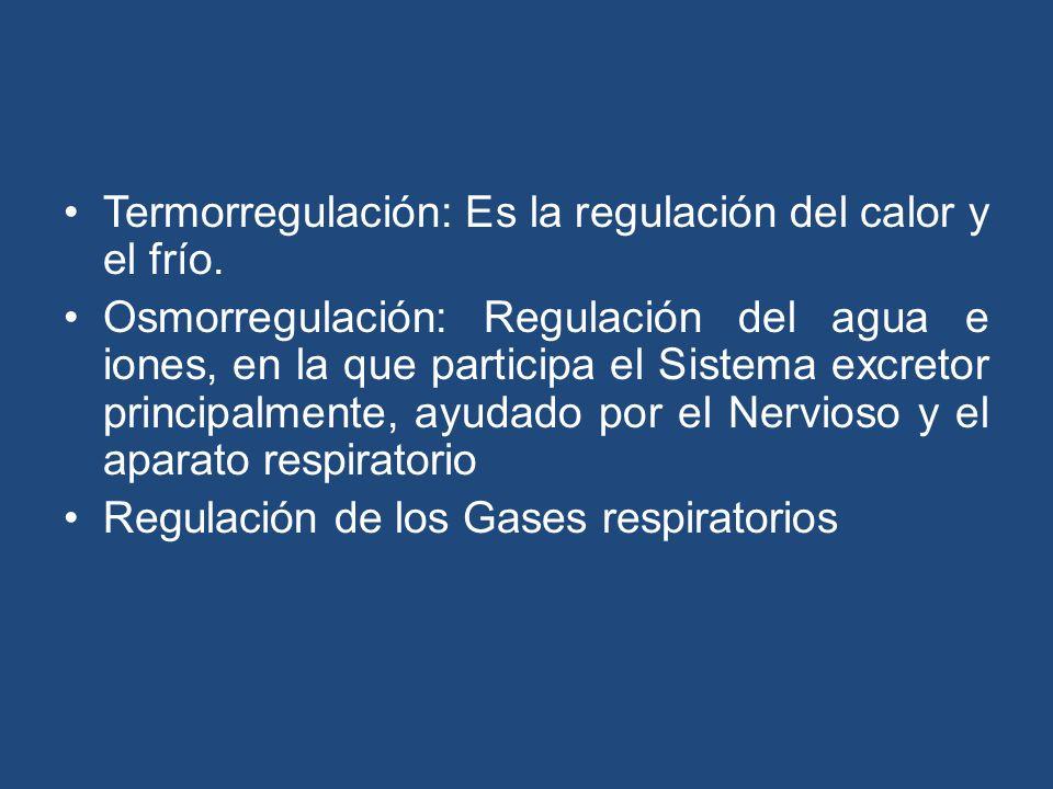 Termorregulación: Es la regulación del calor y el frío.
