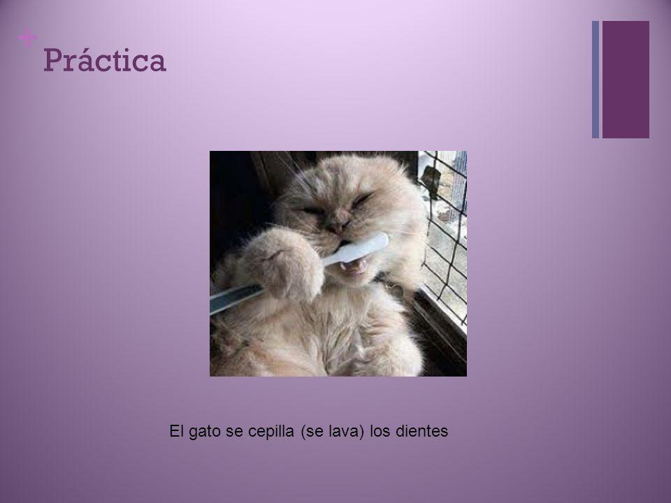 Práctica El gato se cepilla (se lava) los dientes