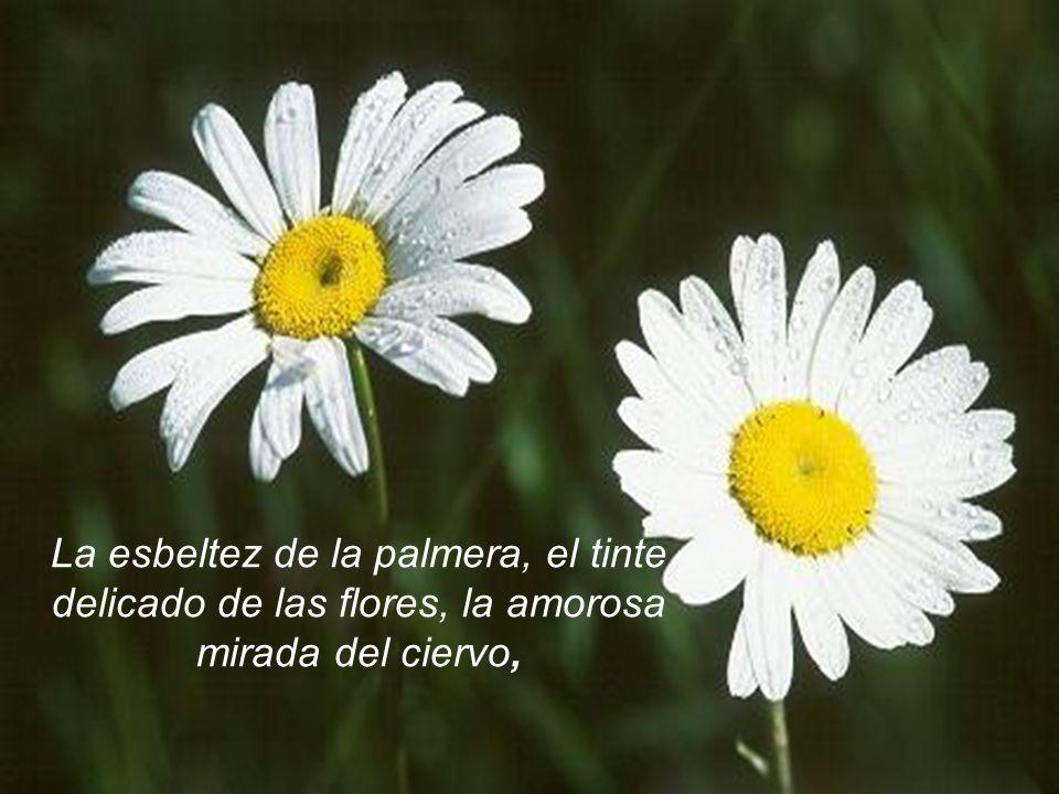 La esbeltez de la palmera, el tinte delicado de las flores, la amorosa mirada del ciervo,