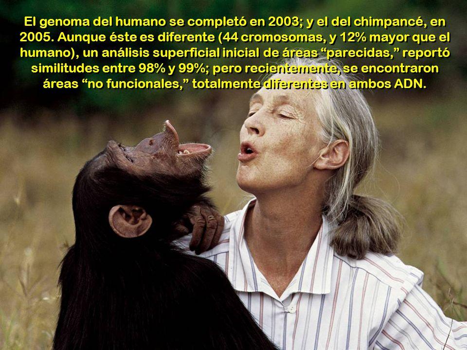 El genoma del humano se completó en 2003; y el del chimpancé, en 2005