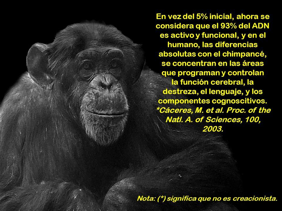 En vez del 5% inicial, ahora se considera que el 93% del ADN es activo y funcional, y en el humano, las diferencias absolutas con el chimpancé, se concentran en las áreas que programan y controlan la función cerebral, la destreza, el lenguaje, y los componentes cognoscitivos. *Cáceres, M. et al. Proc. of the Natl. A. of Sciences, 100, 2003.