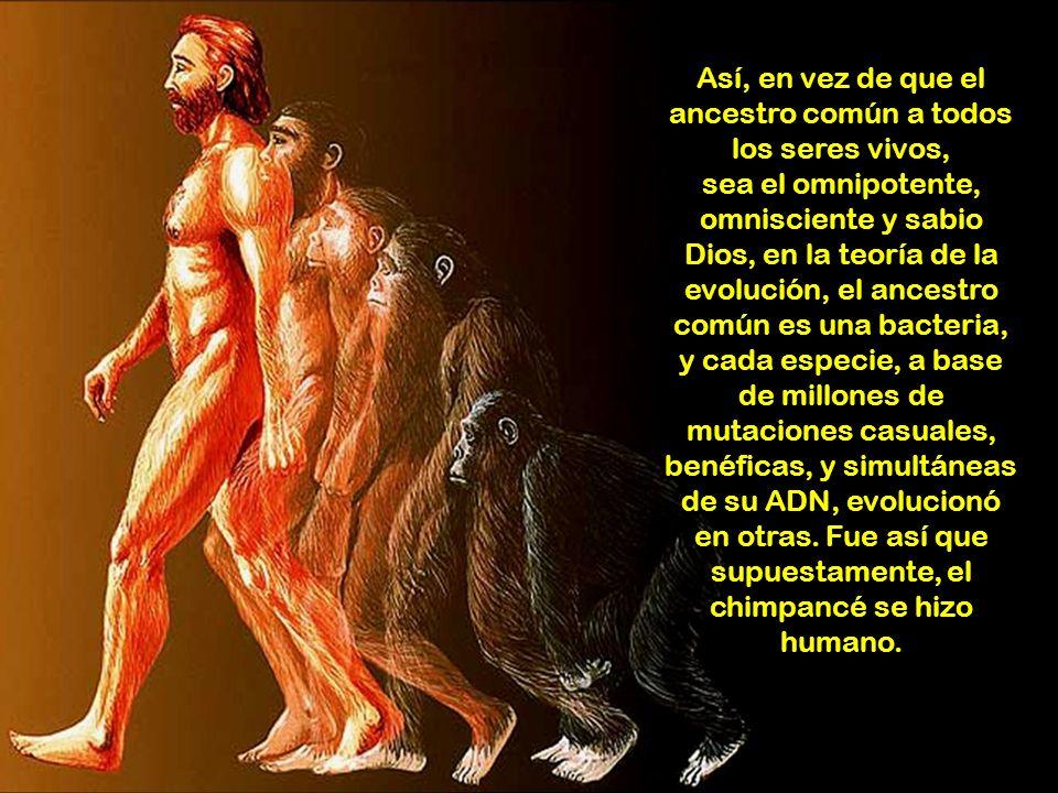 Así, en vez de que el ancestro común a todos los seres vivos, sea el omnipotente, omnisciente y sabio Dios, en la teoría de la evolución, el ancestro común es una bacteria, y cada especie, a base de millones de mutaciones casuales, benéficas, y simultáneas de su ADN, evolucionó en otras.