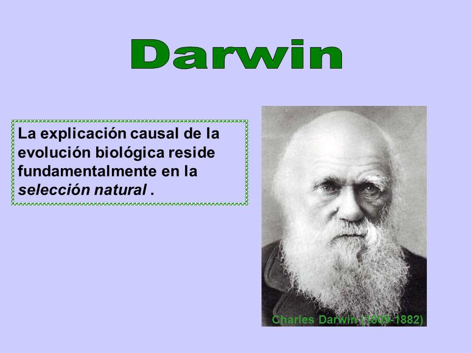 Darwin La explicación causal de la evolución biológica reside fundamentalmente en la selección natural .
