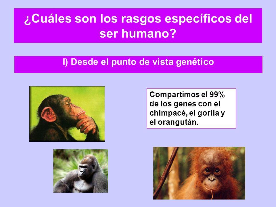¿Cuáles son los rasgos específicos del ser humano