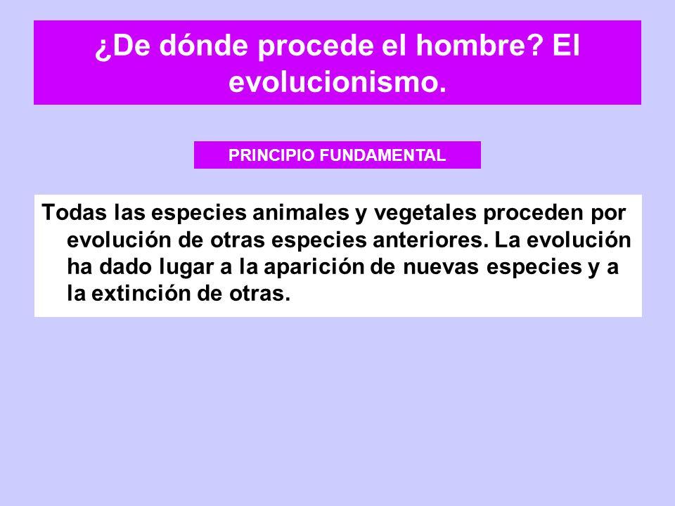 ¿De dónde procede el hombre El evolucionismo.