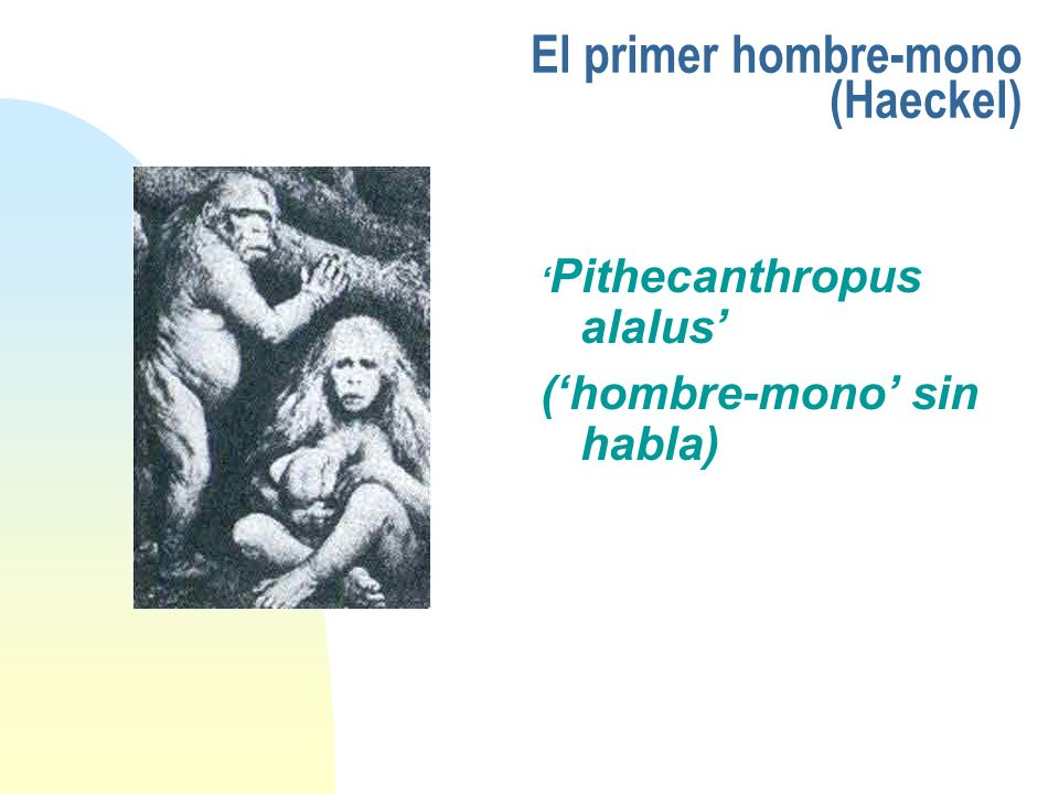 El primer hombre-mono (Haeckel)