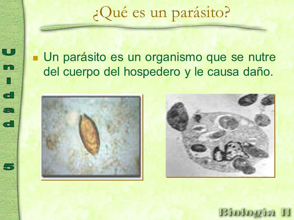 ¿Qué es un parásito.