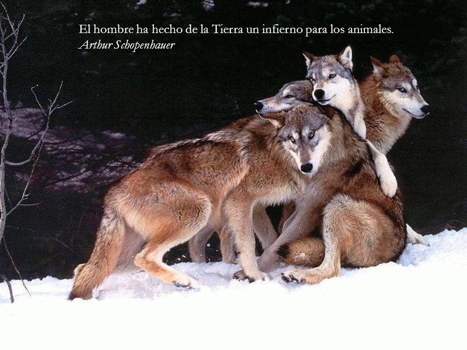 El hombre ha hecho de la Tierra un infierno para los animales.
