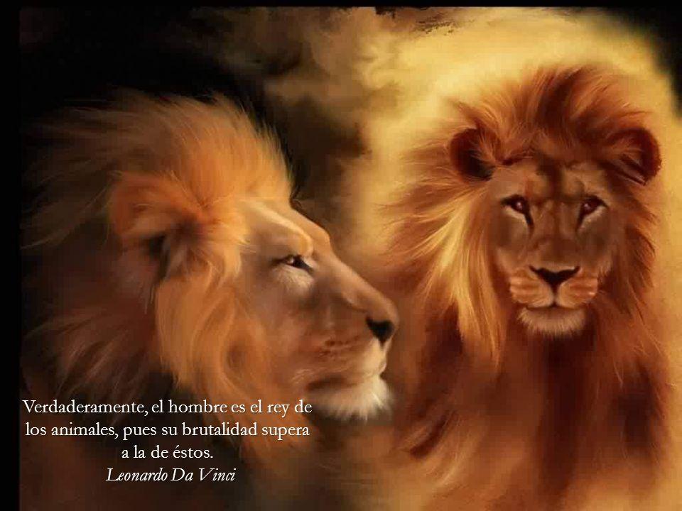 Verdaderamente, el hombre es el rey de los animales, pues su brutalidad supera a la de éstos.