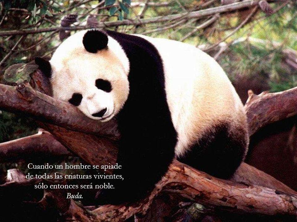 Cuando un hombre se apiade de todas las criaturas vivientes, sólo entonces será noble.