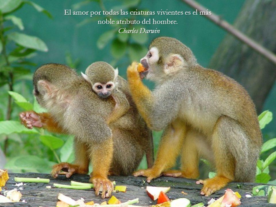 El amor por todas las criaturas vivientes es el más noble atributo del hombre.
