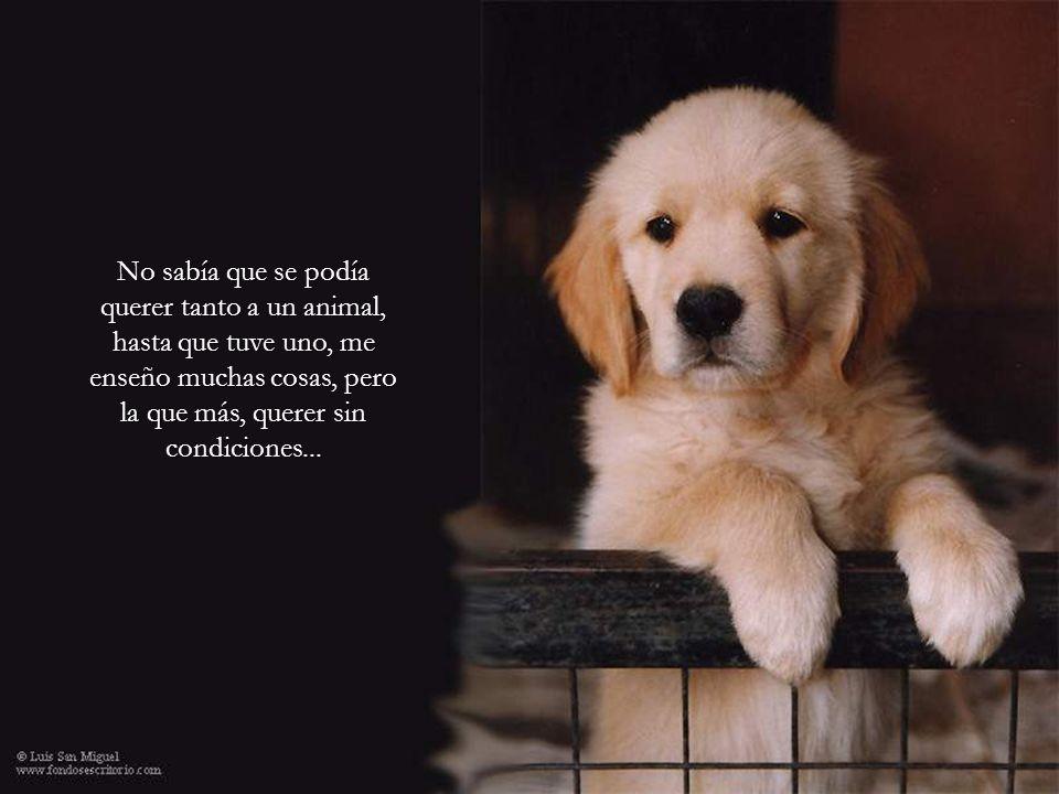 No sabía que se podía querer tanto a un animal, hasta que tuve uno, me enseño muchas cosas, pero la que más, querer sin condiciones...