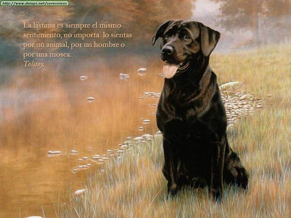 La lástima es siempre el mismo sentimiento, no importa lo sientas por un animal, por un hombre o por una mosca.