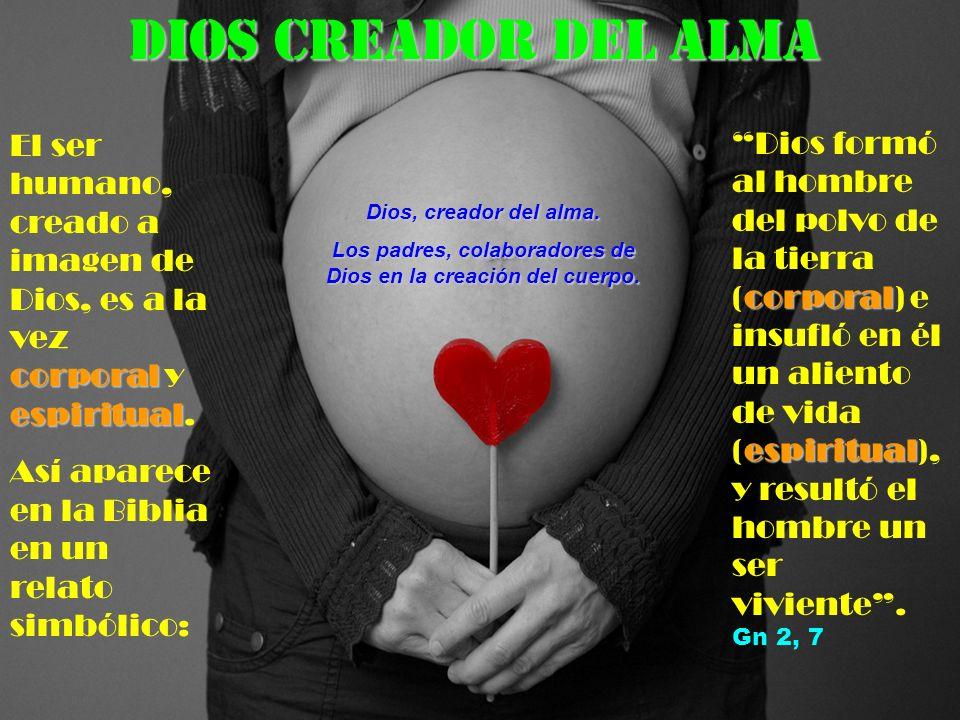 Los padres, colaboradores de Dios en la creación del cuerpo.