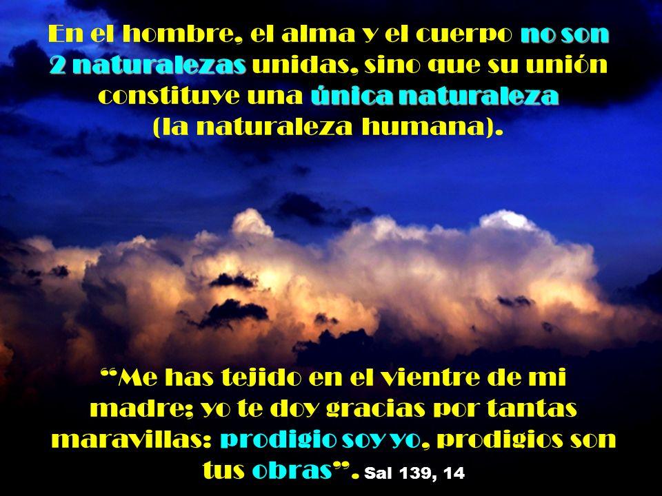 En el hombre, el alma y el cuerpo no son 2 naturalezas unidas, sino que su unión constituye una única naturaleza (la naturaleza humana).
