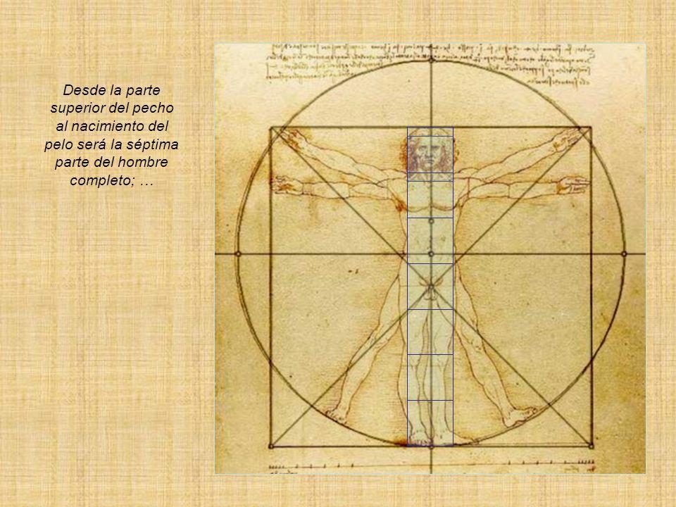 Desde la parte superior del pecho al nacimiento del pelo será la séptima parte del hombre completo; …