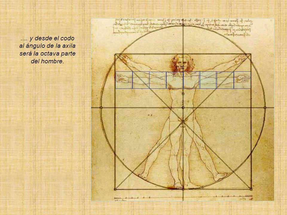 .... y desde el codo al ángulo de la axila será la octava parte del hombre.