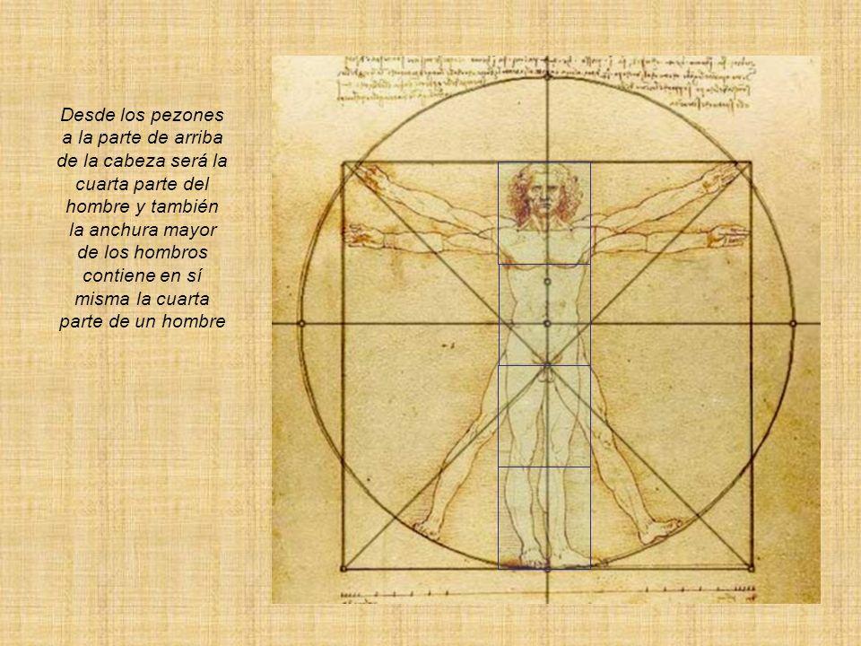 Desde los pezones a la parte de arriba de la cabeza será la cuarta parte del hombre y también la anchura mayor de los hombros contiene en sí misma la cuarta parte de un hombre