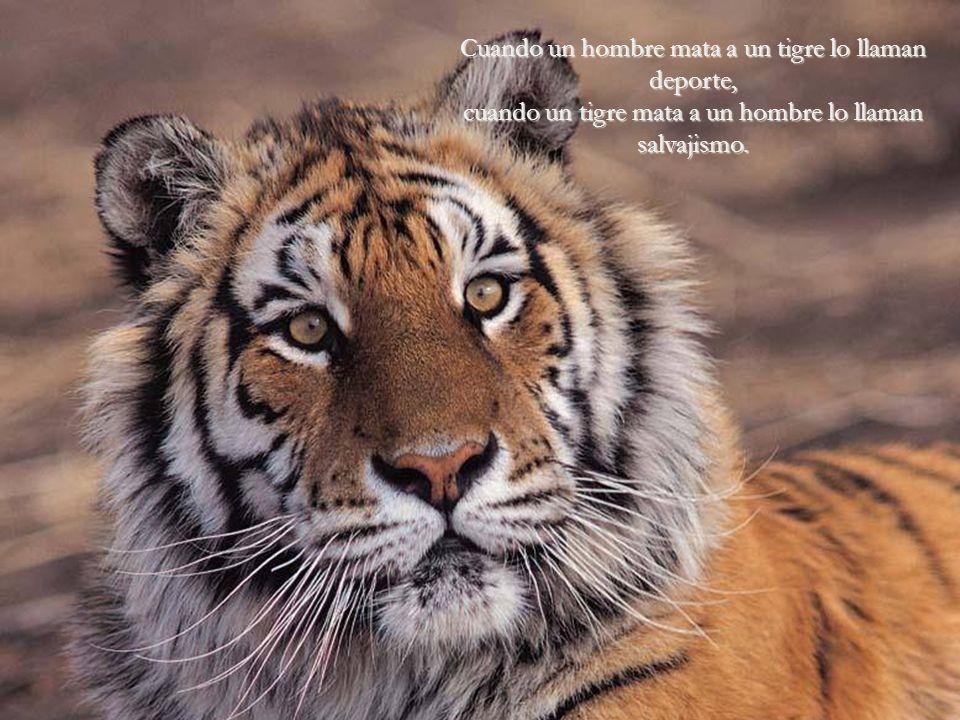 Cuando un hombre mata a un tigre lo llaman deporte, cuando un tigre mata a un hombre lo llaman salvajismo.
