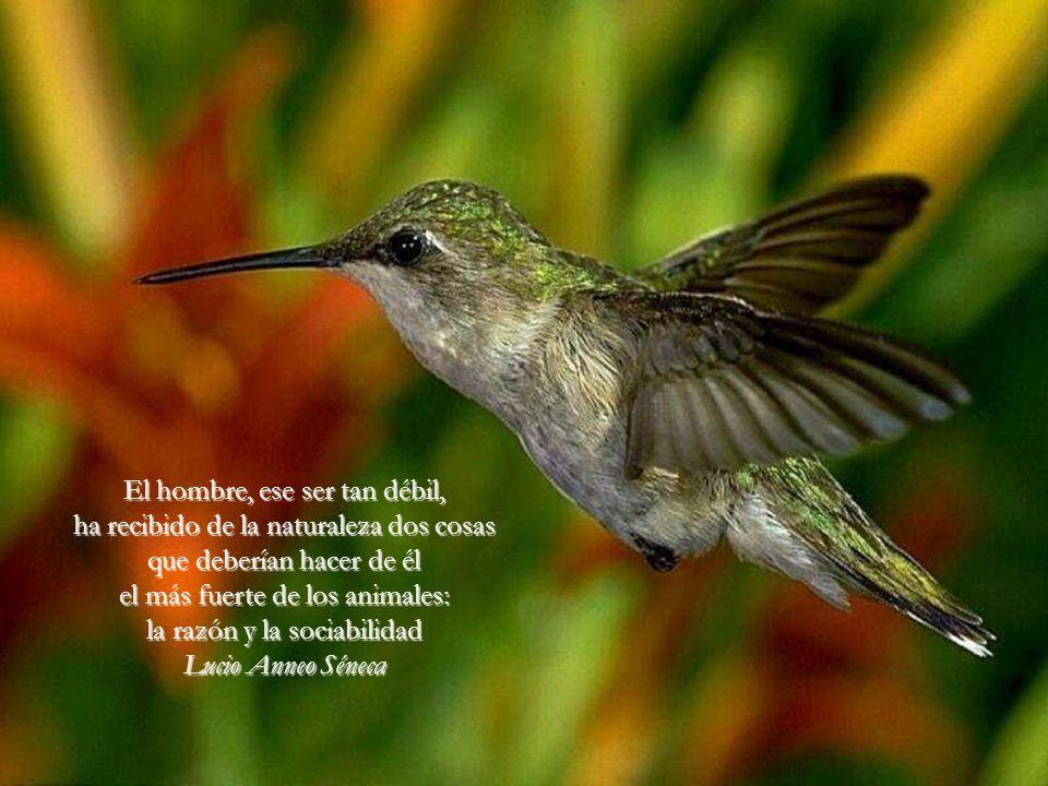El hombre, ese ser tan débil, ha recibido de la naturaleza dos cosas que deberían hacer de él el más fuerte de los animales: la razón y la sociabilidad