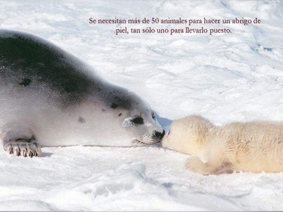 Se necesitan más de 50 animales para hacer un abrigo de piel, tan sólo uno para llevarlo puesto.