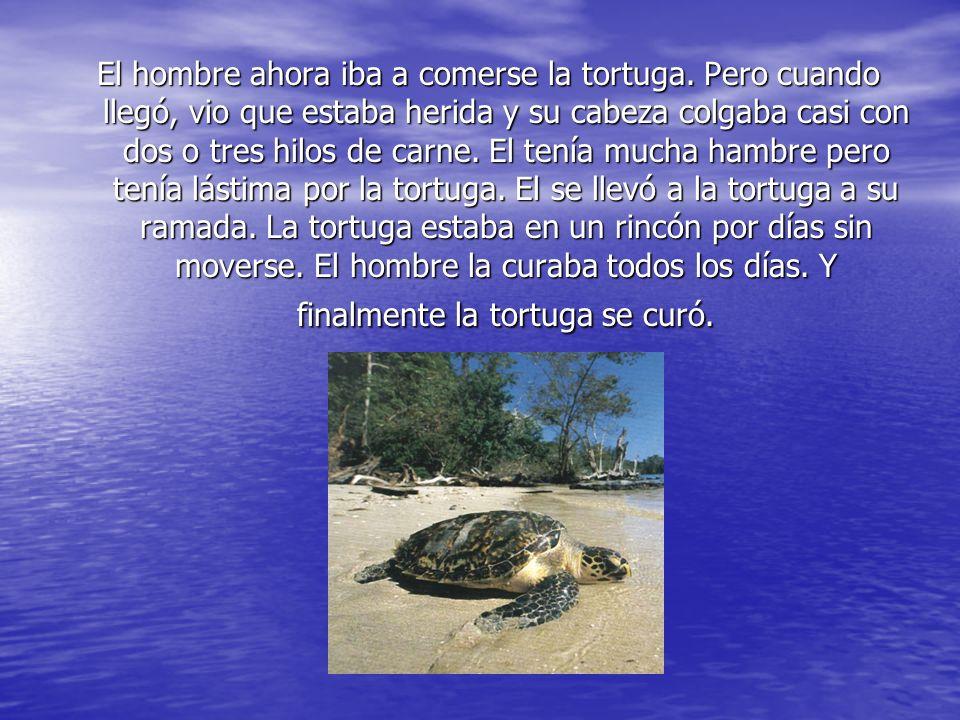 El hombre ahora iba a comerse la tortuga