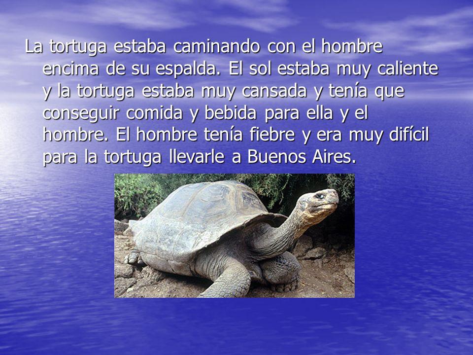 La tortuga estaba caminando con el hombre encima de su espalda