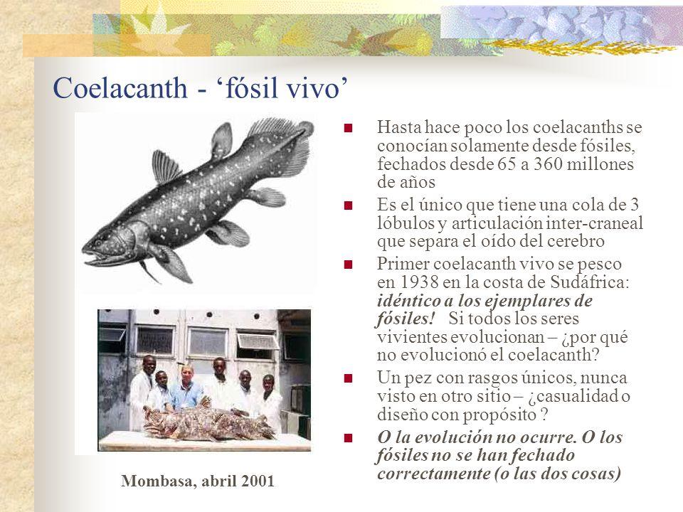 Coelacanth - 'fósil vivo'
