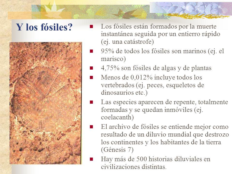 Los fósiles están formados por la muerte instantánea seguida por un entierro rápido (ej. una catástrofe)