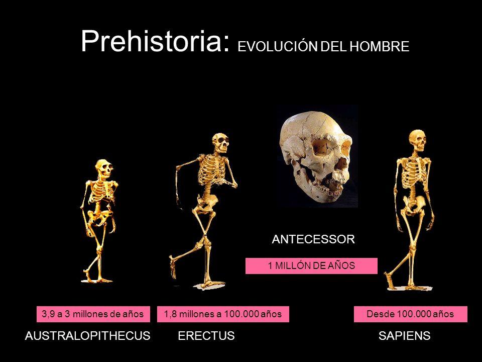 Prehistoria: EVOLUCIÓN DEL HOMBRE